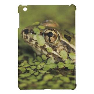 Rio Grande Leopard Frog, Rana berlandieri, Cover For The iPad Mini