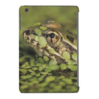 Rio Grande Leopard Frog, Rana berlandieri, iPad Mini Retina Case
