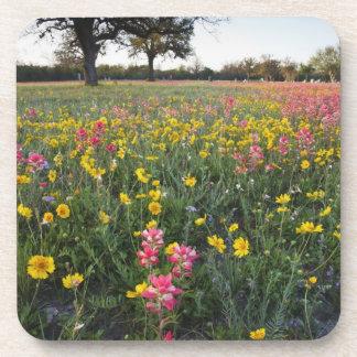 Roadside wildflowers in Texas, spring 3 Drink Coaster