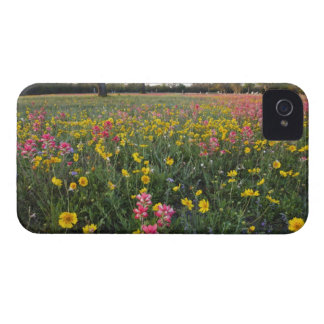 Roadside wildflowers in Texas, spring 3 iPhone 4 Cases