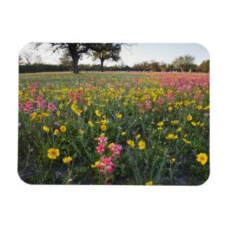 Roadside wildflowers in Texas, spring 3 Rectangular Photo Magnet