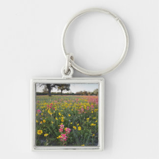 Roadside wildflowers in Texas, spring 3 Silver-Colored Square Key Ring