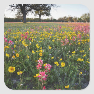 Roadside wildflowers in Texas, spring 3 Square Sticker