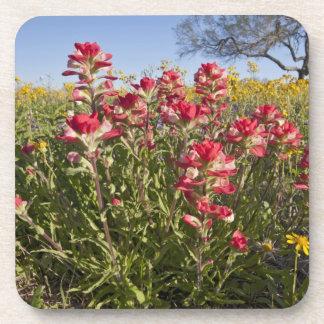 Roadside wildflowers in Texas, spring 4 Drink Coaster