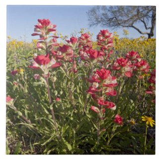 Roadside wildflowers in Texas, spring 4 Large Square Tile