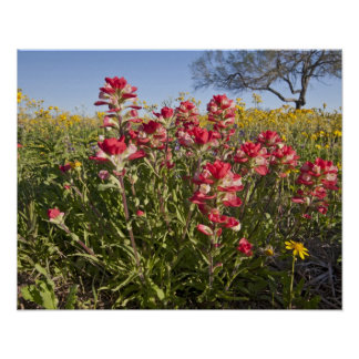 Roadside wildflowers in Texas, spring 4 Poster
