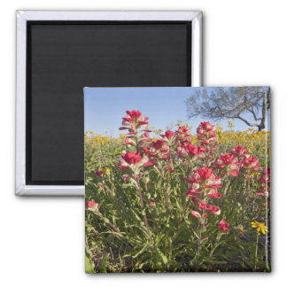 Roadside wildflowers in Texas, spring 4 Square Magnet