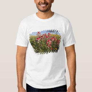 Roadside wildflowers in Texas, spring 4 Tshirt