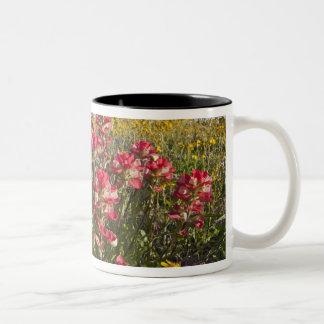 Roadside wildflowers in Texas, spring 4 Two-Tone Mug