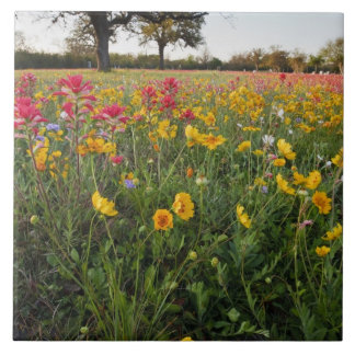 Roadside wildflowers in Texas, spring Large Square Tile