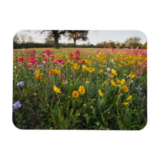 Roadside wildflowers in Texas, spring Rectangular Photo Magnet