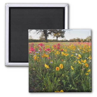 Roadside wildflowers in Texas, spring Square Magnet