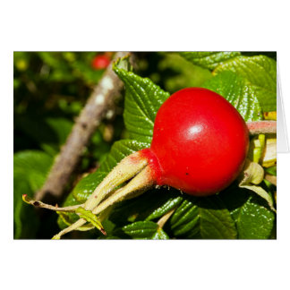 Rose Hip Greeting Card