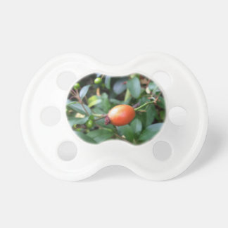 Rose hip ripen baby pacifier