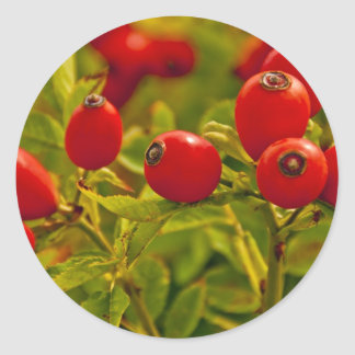 Rose Hip Round Sticker