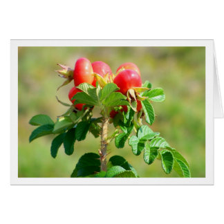 Rose Hips Note Card