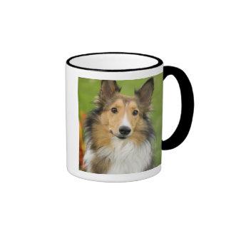 Rough Collie, dog, animal Ringer Mug