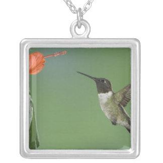 Ruby-throated Hummingbird, Archilochus Square Pendant Necklace