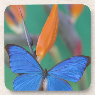 Sammamish Washington Photograph of Butterfly on 2 Drink Coaster