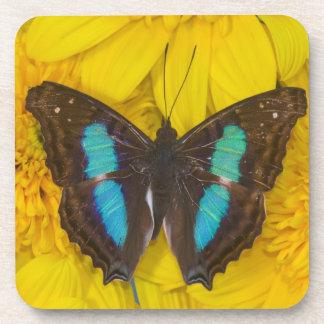 Sammamish Washington Photograph of Butterfly on 7 Coasters