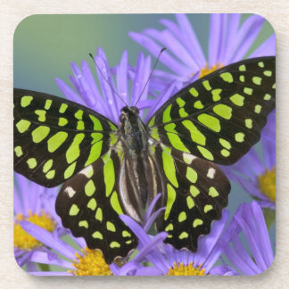 Sammamish Washington Photograph of Butterfly on 9 Coasters