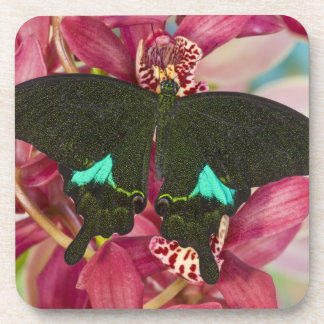 Sammamish, Washington Tropical Butterfly 9 Drink Coasters