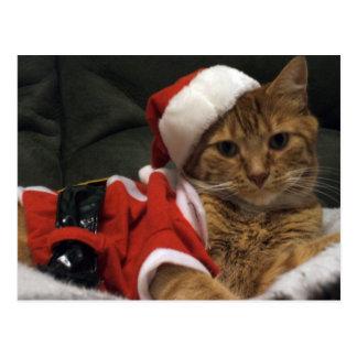Santa Claws Postcard