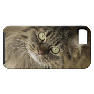 Santa Fe, New Mexico, USA. Maine coon cat. (PR) iPhone 5 Case