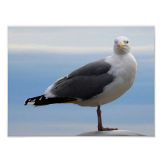Sea Gull Poster