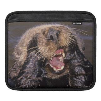 Sea Otters, Enhydra lutris 6 iPad Sleeve