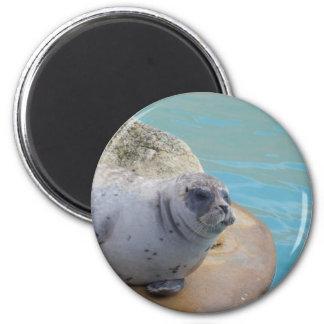 seal 6 cm round magnet