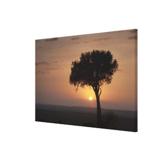 Silhouette of tree on plain, Masai Mara Gallery Wrap Canvas