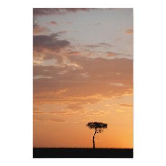 Silhouette of tree on plain, Masai Mara Photo