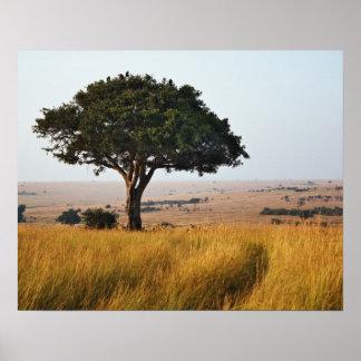Single acacia tree on grassy plains, Masai Mara, Poster