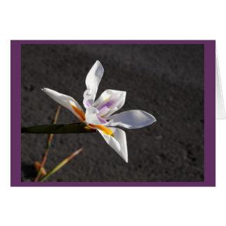 Single Iris Note Card