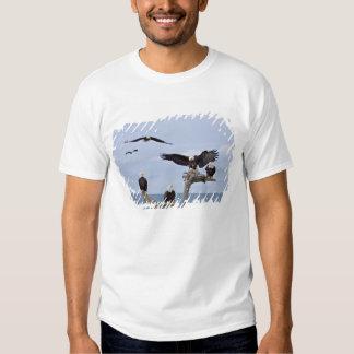 Six Bald Eagles (Haliaeetus leucocephalus) Tees