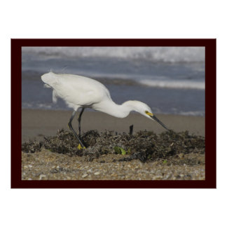 Snowy Egret - Environmental Portrait Poster