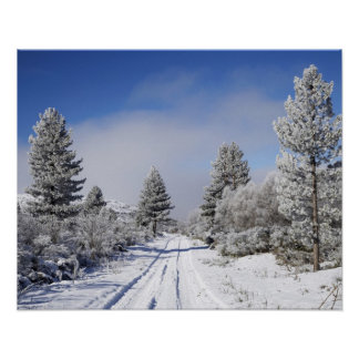 Snowy Track and Pine Trees, Cambrians, near St Poster