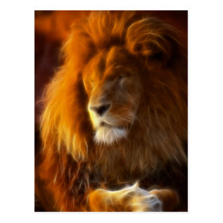 Soaking Up the Sun, King of the Jungle Lion II Postcard