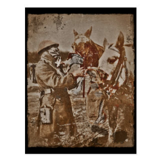 Soldier and Horses in Gas Masks Postcard