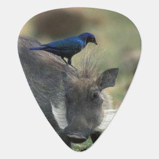 South Africa, Pilanesburg GR, Warthog Guitar Pick