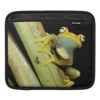 South America, Ecuador, Amazon. Tree frog (Hyla Sleeve For iPads