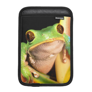 South America, Ecuador, Amazon. Tree frog iPad Mini Sleeves
