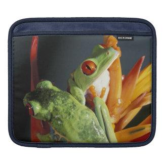 South America. Red-eyed tree frog Agalycmis iPad Sleeves