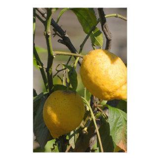 Spanish Lemon Graphics Custom Stationery