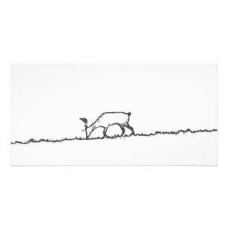 Stag Charcoal Note Card Photo Cards