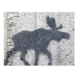 Stencil Graffiti Moose Postcard