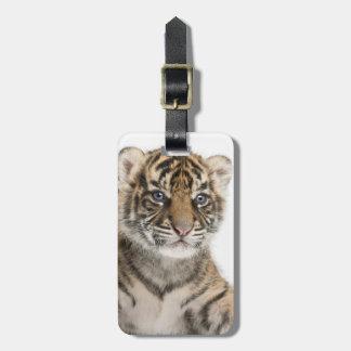 Sumatran Tiger cub Bag Tags