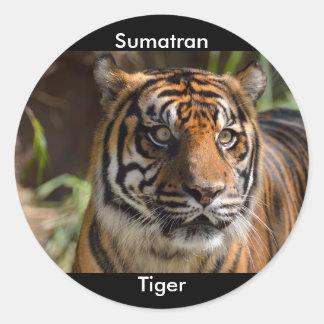 Sumatran Tiger Round Sticker