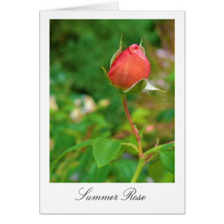 Summer Peach Rose Bud Greeting Card